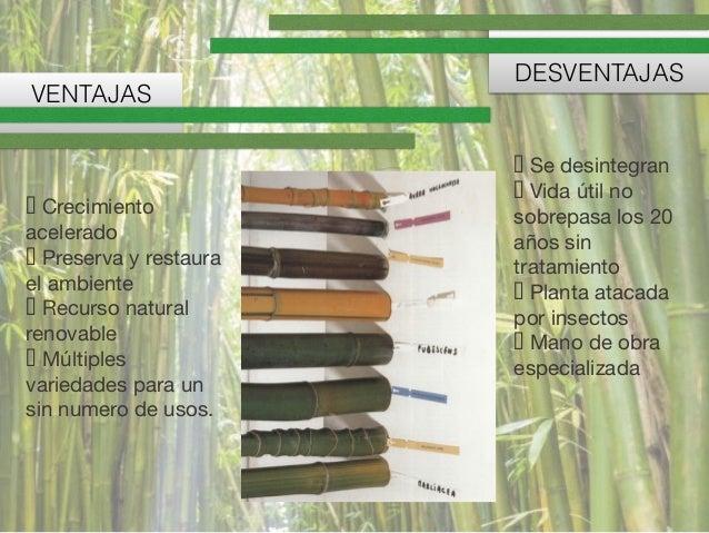 Bambu - Tipos de bambu ...