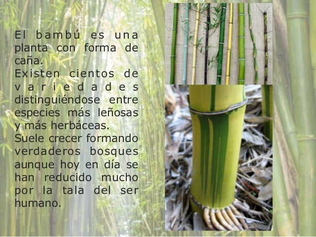 Laura and bambu - 5 1