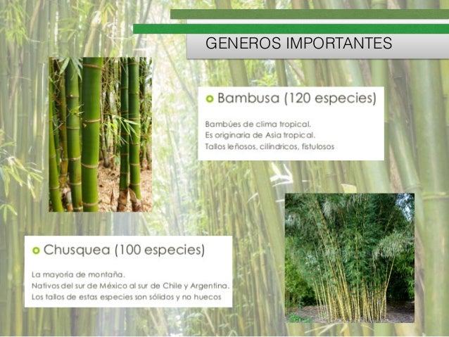 Bambu - Suelos de bambu ...