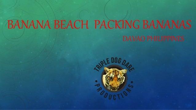 BANANA BEACH PACKING BANANAS DAVAO PHILIPPINES