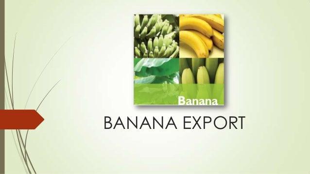 BANANA EXPORT