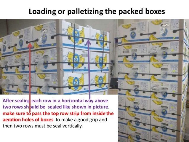 Banana Exports Packing Procedure