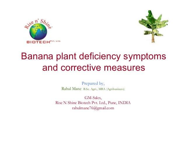 Banana plant deficiency symptoms and corrective measuresand corrective measures Prepared by, Rahul Mane B.Sc. Agri., MBA (...