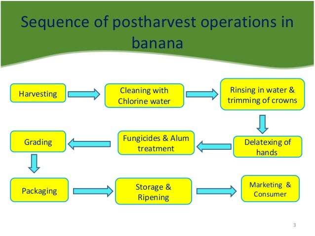post harvest handling of apple pdf