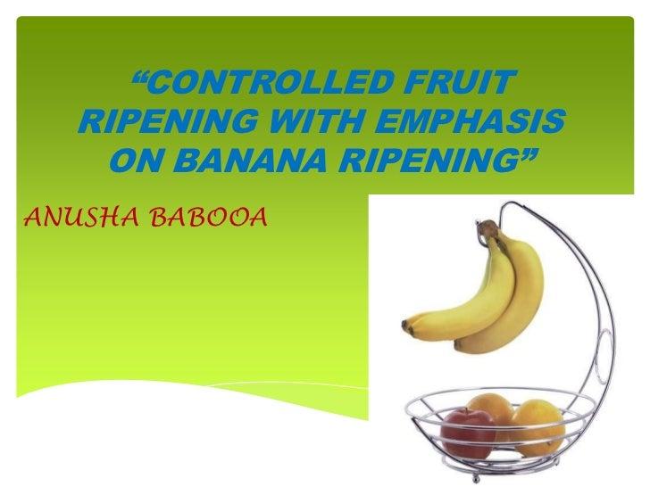 """""""CONTROLLED FRUIT  RIPENING WITH EMPHASIS   ON BANANA RIPENING""""ANUSHA BABOOA"""