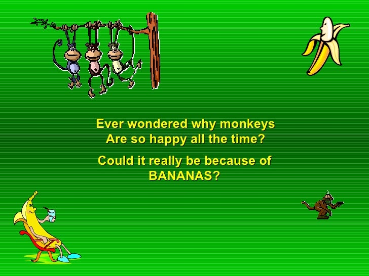 Ever wondered why monkeys Are so happy all the time? Could it really be because of BANANAS?