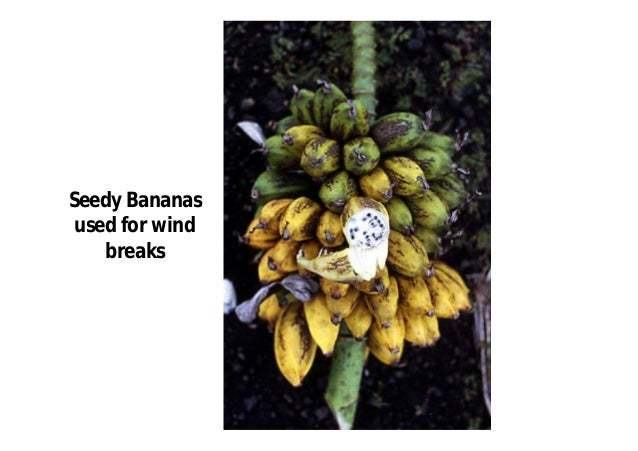 The following hybrids have also been  identified between these species:  AB—'Apple' banana  AAB—Plantain, 'Silk Fig'  ABB—...