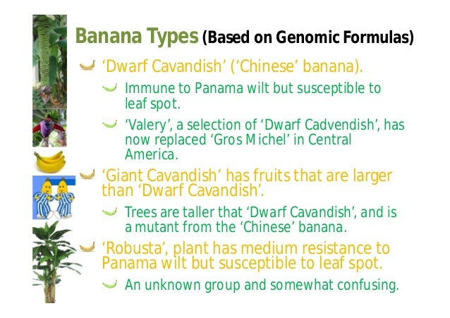 Banana Types (Based on Genomic Formulas)  AAAA  ICT-2 ('Golden Beauty') derived from the  Imperial College of Trinidad.  O...