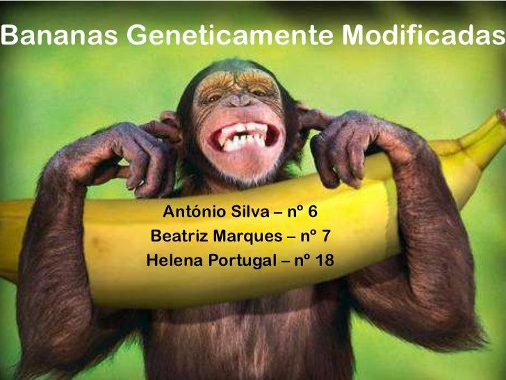 Bananas Geneticamente Modificadas          António Silva – nº 6         Beatriz Marques – nº 7         Helena Portugal – n...