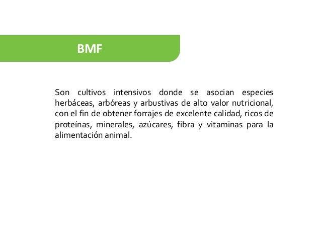 BMF Son cultivos intensivos donde se asocian especies herbáceas, arbóreas y arbustivas de alto valor nutricional, con el f...