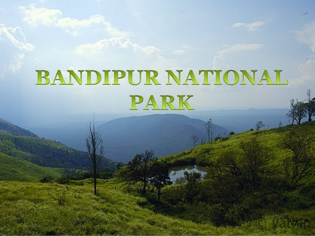 INTRODUCTION Bandipur National Park is a wonderful destination which thousands of flora and fauna in the wonderful forest ...