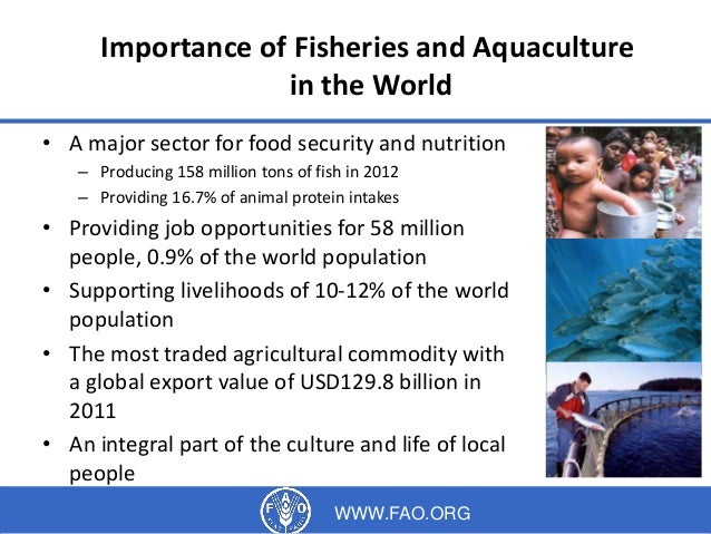 Fisheries And Aquaculture In Bangladesh And Potential