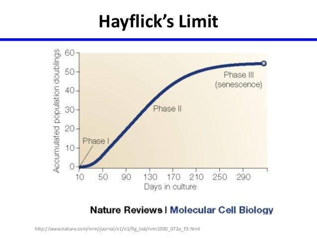 Ageless Animals and Plants Molecular Clock Human