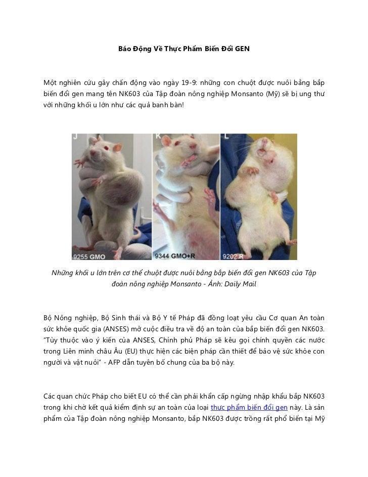 Báo Động Về Thực Phẩm Biến Đổi GENMột nghiên cứu gây chấn động vào ngày 19-9: những con chuột được nuôi bằng bắpbiến đổi g...
