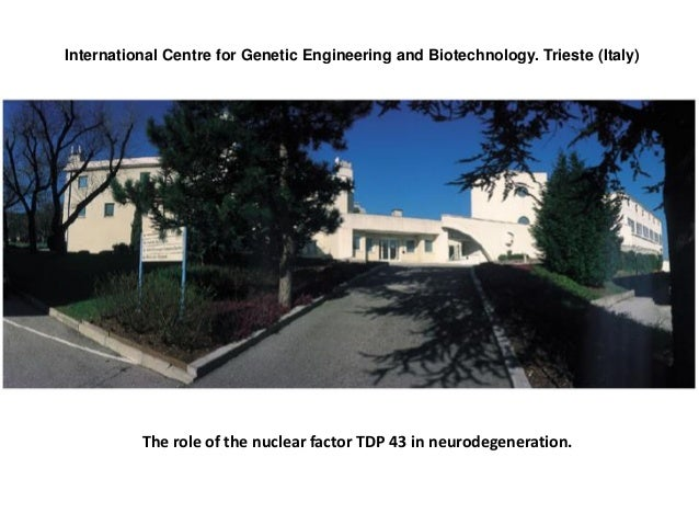 International Centre for Genetic Engineering and Biotechnology. Trieste (Italy) The role of the nuclear factor TDP 43 in n...