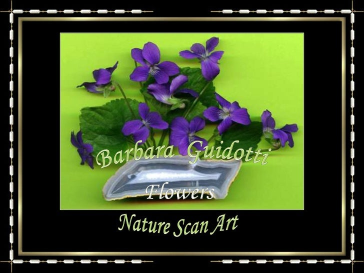 Barbara  Guidotti<br />Flowers<br />Nature Scan Art<br />