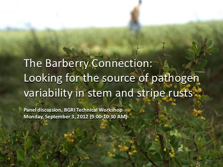 The Barberry Connection:Looking for the source of pathogenvariability in stem and stripe rustsPanel discussion, BGRI Techn...