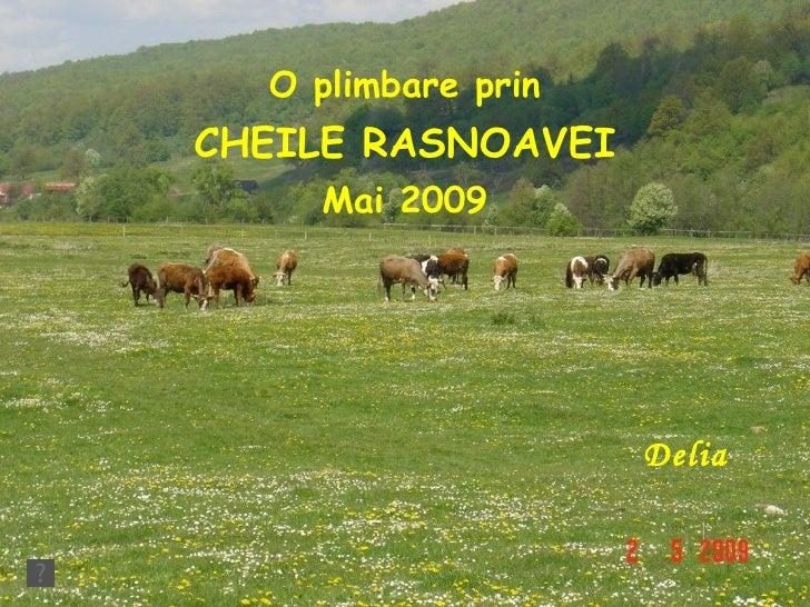 Delia O plimbare prin CHEILE RASNOAVEI Mai 2009