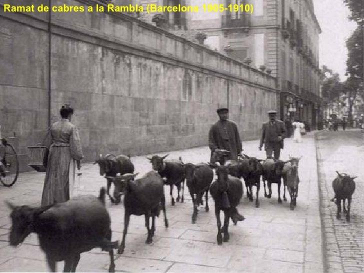 Ramat de cabres a la Rambla (Barcelona 1905-1910)