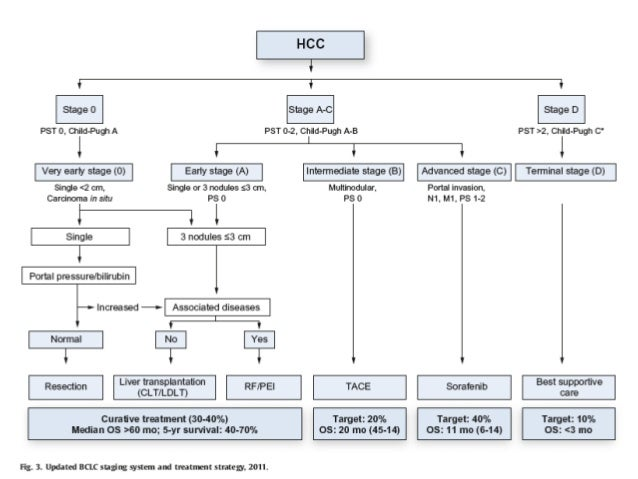 barcelona clinic liver cancer guidelines