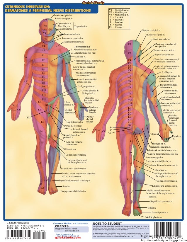 Peripheral Nervous System Chart Ibovnathandedecker