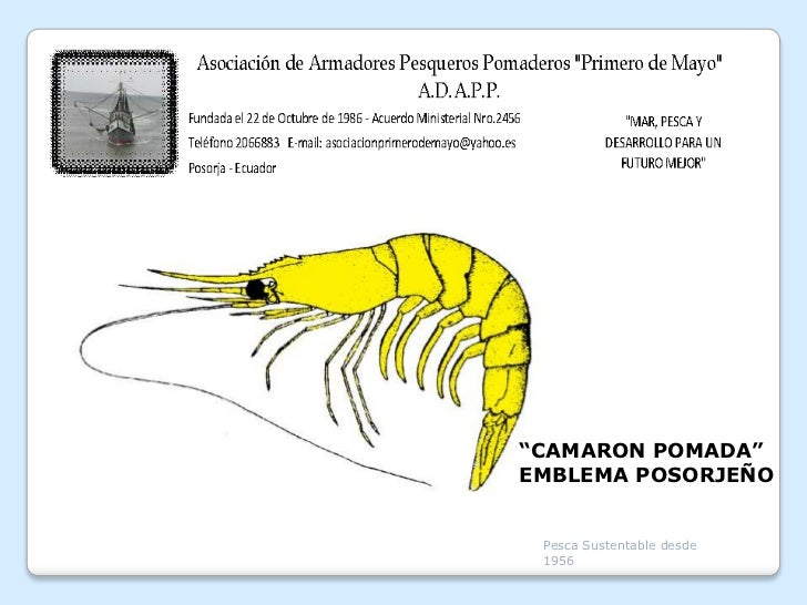 """""""CAMARON POMADA""""EMBLEMA POSORJEÑO Pesca Sustentable desde 1956"""