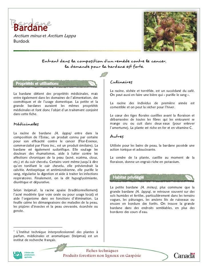 BardaneBardaneArctium minus et Arctium LappaBurdock                             Entrant dans la composition d'un remède co...