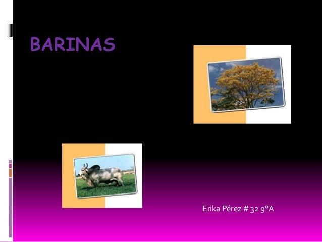 BARINAS  Erika Pérez # 32 9°A