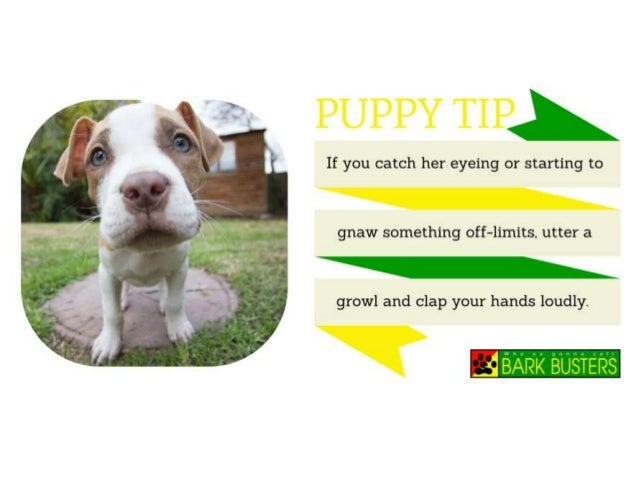 puppy training tips essay Process essay how to potty train a dog essays and research papers we cover many of the basics of dog training writing tips free essays study.