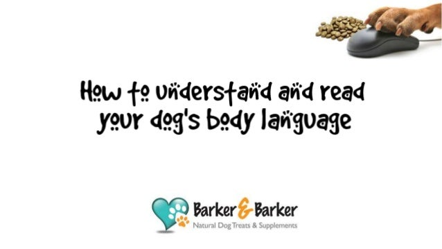Do you ever wonder what your dog is trying to tell you? It would be so much easier if they could just speak! However there...