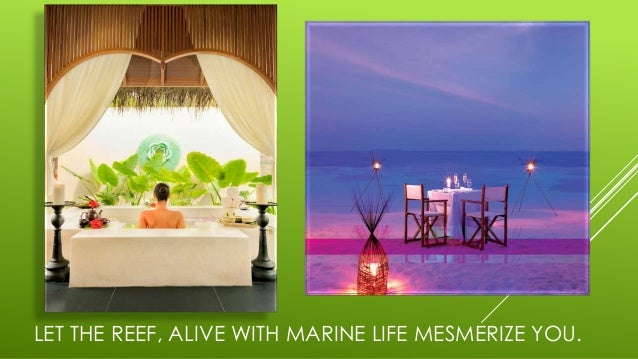 LET THE REEF, ALIVE WITH MARINE LIFE MESMERIZE YOU.