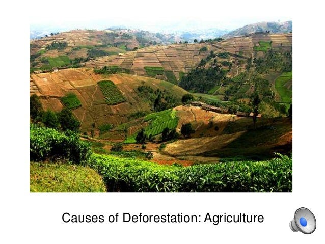 Deforestation and its consequences