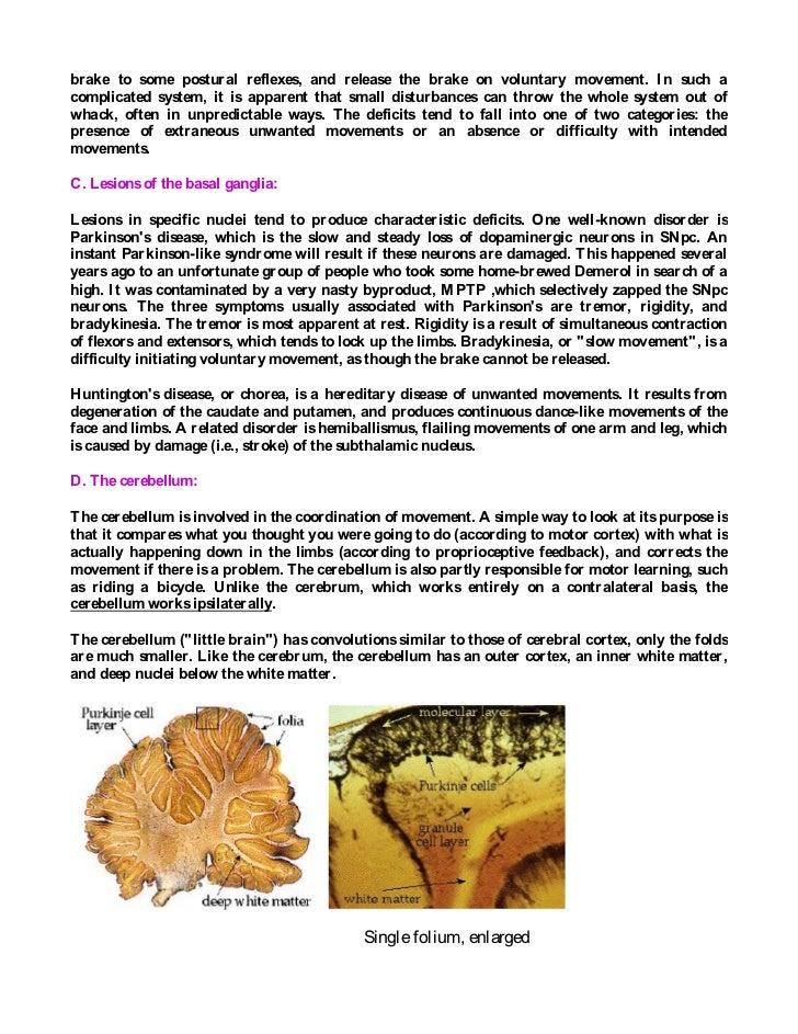 Colorful Cerebellum Anatomy Ppt Embellishment - Anatomy And ...