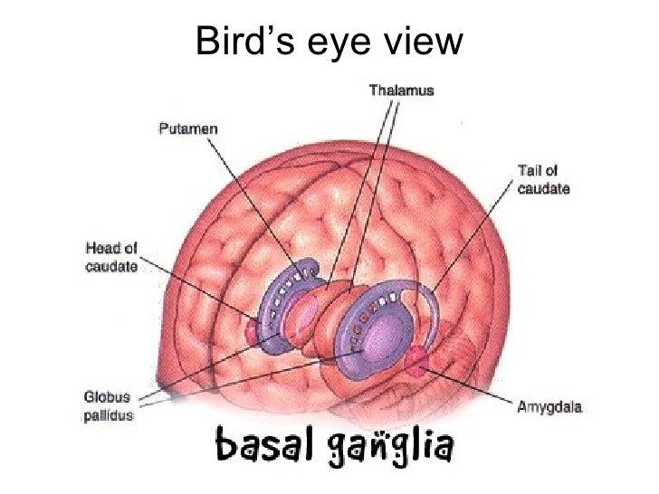Basal ganglia 101