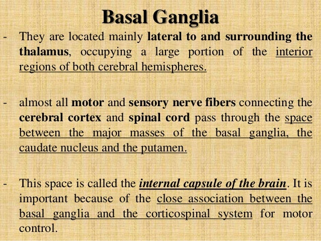 basal ganglia notes The anatomy of the basal ganglia  if you would prefer to make your notes in a separate document you may wish to download the 'learning notes' below.