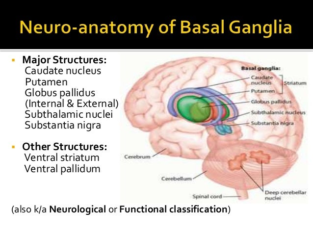 NEURO-ANATOMY OF BASAL GANGLIA AND ITS CLINICAL IMPLICATIONS
