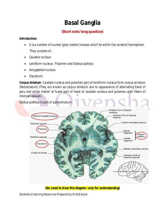 Basal ganglia dr.gosai