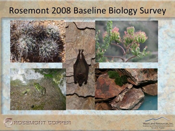 Rosemont 2008 Baseline Biology Survey