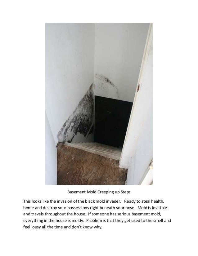 how to know if your house has mold