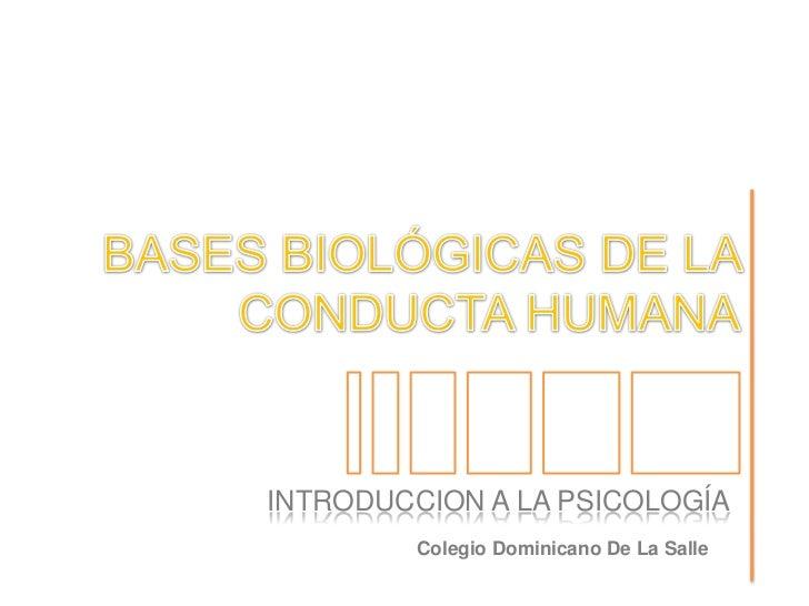 BASES BIOLÓGICAS DE LA CONDUCTA HUMANA<br />INTRODUCCION A LA PSICOLOGÍA<br />Colegio Dominicano De La Salle<br />