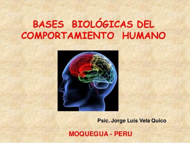 BASES BIOLÓGICAS DELCOMPORTAMIENTO HUMANOPsic. Jorge Luis Vela QuicoMOQUEGUA - PERU