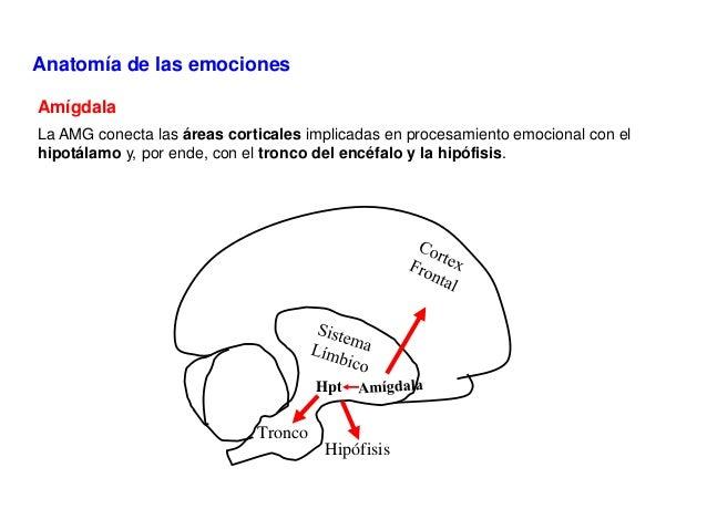 Bases neurobiológicas de la respuesta emocional