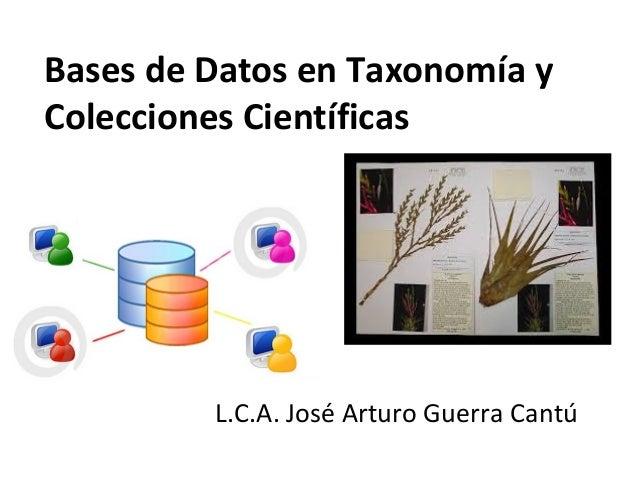 Bases de Datos en Taxonomía y Colecciones Científicas L.C.A. José Arturo Guerra Cantú