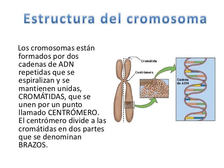Bases de la genetica puesta en comun for Como estan formados los suelos