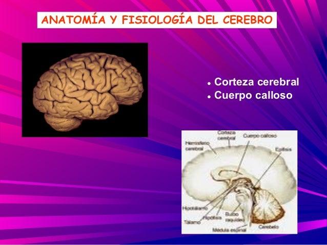 Bases fisiológicas de la conducta y conocimiento.ppt