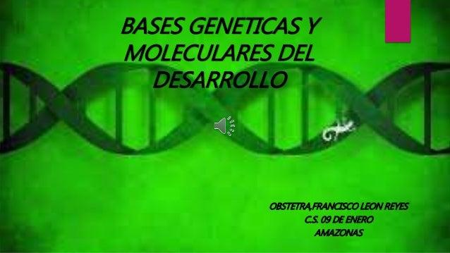 BASES GENETICAS Y  MOLECULARES DEL  DESARROLLO  OBSTETRA,FRANCISCO LEON REYES  C.S. 09 DE ENERO  AMAZONAS