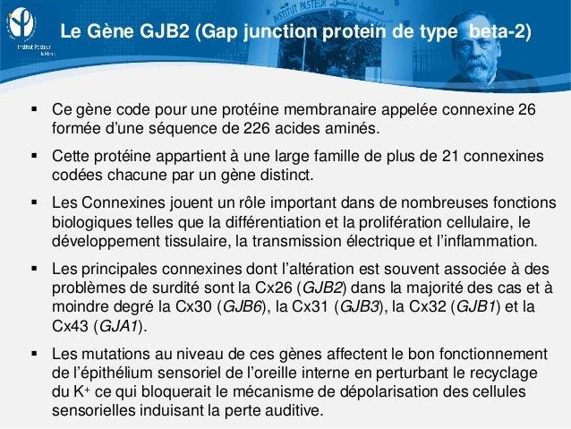  Ce gène code pour une protéine membranaire appelée connexine 26 formée d'une séquence de 226 acides aminés.  Cette prot...