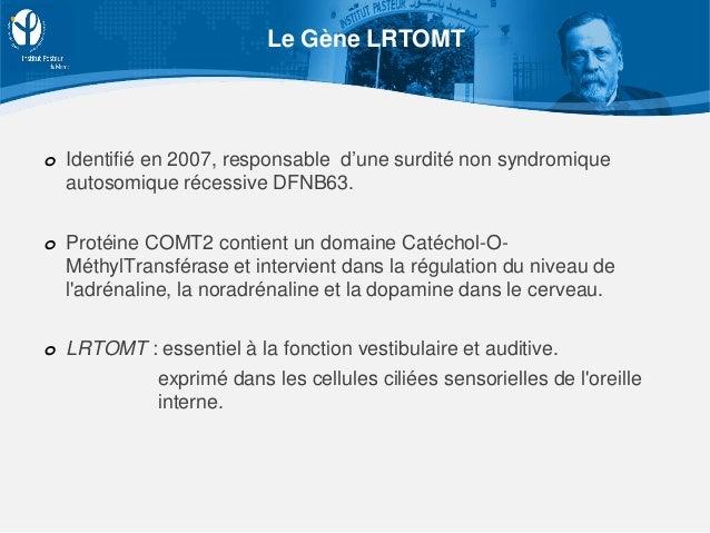 Le Gène LRTOMT o Identifié en 2007, responsable d'une surdité non syndromique autosomique récessive DFNB63. o Protéine COM...