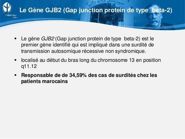  Le gène GJB2 (Gap junction protein de type beta-2) est le premier gène identifié qui est impliqué dans une surdité de tr...