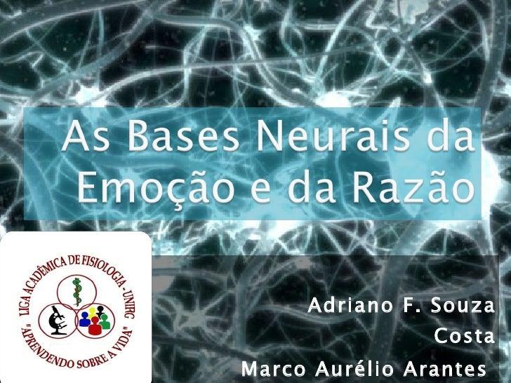 As bases neurais da emoção e da razão
